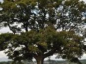 Auprès arbre...