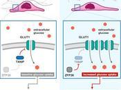 #Cell #matriceextracellulaire #métabolismeduglucose #GLUT1 remodelage matrice extracellulaire soumet métabolisme glucose régulation déstabilisation TXNIP