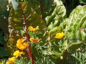 Après l'arrêt canicule, légumes reprennent vigueur
