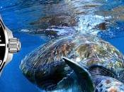 Montres Certina: sous totem tortue