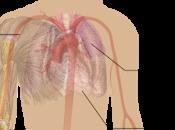 #thelancet #lupusérythémateuxsystémique #ustekinumab Efficacité sécurité l'ustekinumab, inhibiteur IL-12 IL-23, chez patients atteints lupus érythémateux systémique résultats d'une étude phase multicentrique randomisée doub...