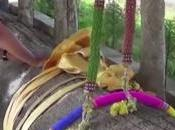 Thaïlande sacrifice grand arbre centenaire (vidéo)