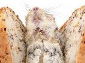Rats villes rats champs