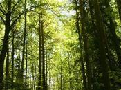 Comment crée forêt