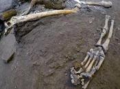 Cinq squelettes découverts lors nouvelles fouilles Pompéi