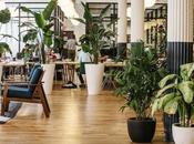 [Déco] Paris Pousse, site vous livre plus belles plantes