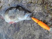 Pêche perche début saison