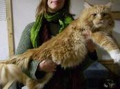 Nous avons rencontré plus gros chat monde