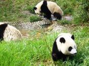 Voyage Chengdu Sichuan