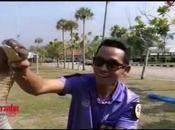 Thaïlande insolite: Attraper cobra royal mètres main nues