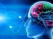 ADAPTABILITÉ neurones savent travailler équipe