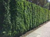 clôtures jardin naturelle artificielle