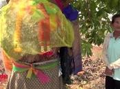 Loterie Thaïlande, arbre enceinte donne numéros gagnants