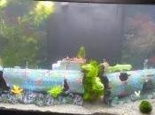 nouvel aquarium