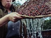 Nespresso Master Origin Costa Rica, café grains lavés dans l'eau thermale volcanique