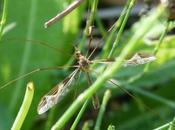 Plus plantes repoussent moustiques