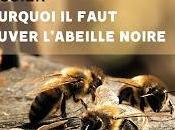 faut sauver l'abeille noire