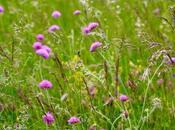 Dans hautes herbes