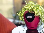 Lua, fleurs connecté transforme plantes vertes Tamagotchi