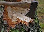 Comment abattre arbre