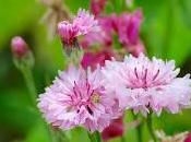 Brèves prairie fleurie