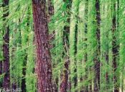 Dans forêt mélèzes