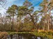 Découverte forêt Fontainebleau exposition photo