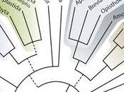 #trendsinecologyandevolution #arbrephylogénétique L'Arbre Nouveau Eucaryotes