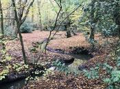 grand d'air frais Epping Forest