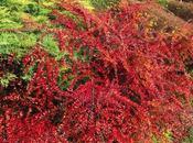 différents arbustes jardin