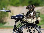 Faire vélo avec chien solutions