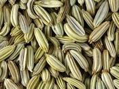 bienfaits graine fenouil (Xiao Xiang)
