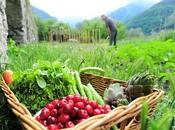 PRÉVENTION l'ALIMENTATION Mais comment mesurer apports réels nutriments