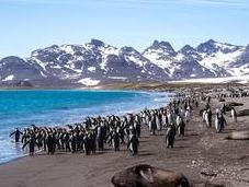 L'aventure merveilleuse Antarctique Partie Géorgie