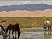Nouveau voyage initiatique mongolie disponible