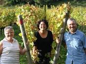 Bourgogne Vigne Verre