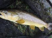 voyage pêche mouche Bosnie