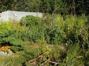Tour complet jardin permaculture juin 2020 (vidéo)