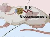 #Cell #IL-6 #stress #modèlemurin Origine Fonction l'IL-6 Induite Stress chez Modèles Murins