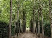 Promenade dans jardins Versailles, désert royal