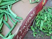 C'est saison conserves haricots verts grecque