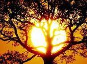 Soleil cherche futur