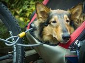 Comment fixer remorque pour chien vélo