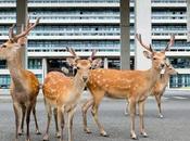 Dans ville Nara, Japon, cerfs promènent liberté. photographe Yoko Ishii profité