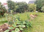 conseils pour créer jardin nourricier permaculture