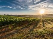 Acheter vignes est-ce rentable