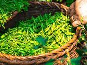 bienfaits vert selon nutritionnistes
