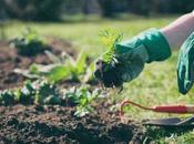 Gants jardinage comment choisir