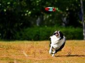 Quelle race chien pour courir