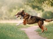 Colliers pour chien quelle utilité, quelles sont marques existantes